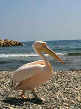 Кипр – остров моря и солнца