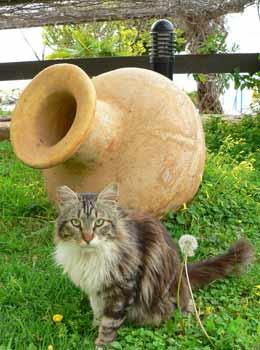 Кипр – остров кошек